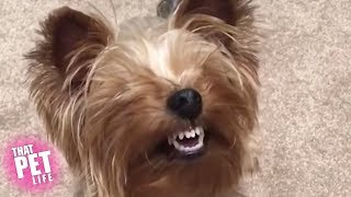Download Goofy Dogs of the Week 😂 | Try Not to Laugh Challenge Video
