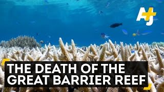 Download The Death Of The Great Barrier Reef Video