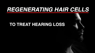 Download Regenerating Hair Cells to Treat Hearing Loss Video