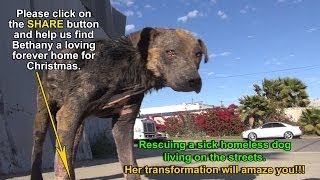 Download A homeless dog living on the streets gets rescued, transformed and is now looking for a home. Video