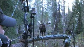 Download Yukon Moose Hunt Video