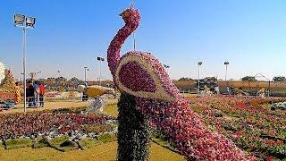 Download Ahmedabad Flower Show 2019, Sabarmati Riverfront, Ahmedabad, Gujarat, India Video