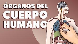 Download Órganos del cuerpo humano Video