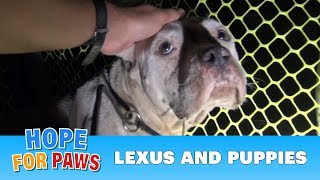 Download A Pit Bull and her newborn pups get rescued, but what happens next will amaze you!!! Please share. Video
