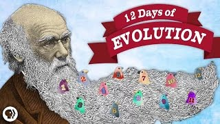 Download The 12 Days of Evolution - Complete Series! Video