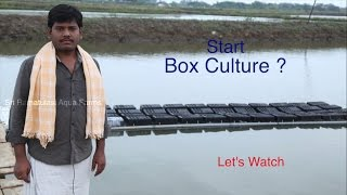 Download Mud Crab Culture in Boxes Beginners Video Video