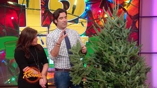 Download A Neat Tip for Covering Unsightly Gaping Holes in Your Tree Video