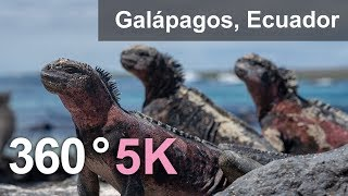 Download Animals of Galápagos archipelago, Ecuador. 360 video in 5K Video