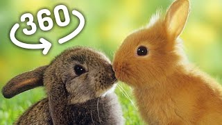 Download 360 VR Videos Cute BUNNIES for VR Box 360 Virtual Reality 360 VR 4K Video