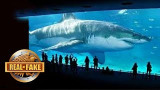 Download BILLIONAIRE BRINGS MEGALODON SPECIES BACK TO LIFE - real or fake? Video