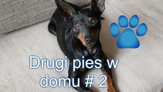 Download Vlog drugi pies w domu dzień 2 + czytaj opis(ważne) Video