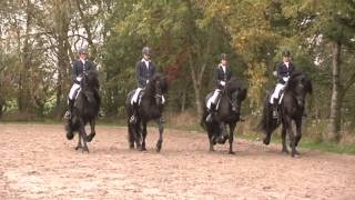Download Stal Okkema presentatie friese paarden Video