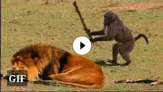 Download Funny Animals ; Funny video Video