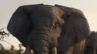 Download WWF elephants Christmas advert 2017 Video