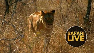 Download safariLIVE - Sunrise Safari - August 30, 2018 Video