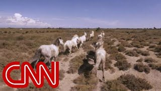 Download Running with France's wild horses - 360 Video Video