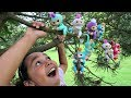 Download Fingerlings Surprise Baby Monkeys In Our Tree - Kids Toy Review | Toys AndMe Video