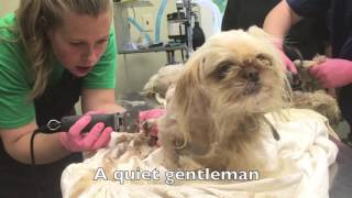 Download Abandoned Puppy Mill Dogs Rescued Video