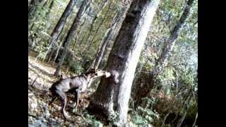 Download Peanut Butter Deer Feeder First Attempt Video