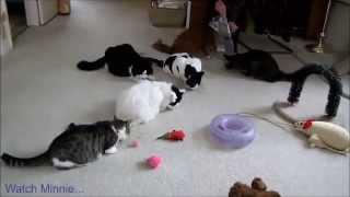 Download Bêtisier de chats ! Video