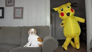 Download Dog Surprised by Dancing Pokemon: Cute Dog Maymo Video