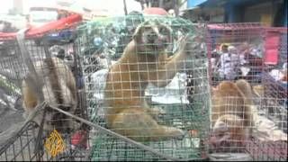 Download Animal trafficking in Indonesia Video