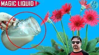 Download SECRET LIQUID FERTILIZER   See What Happens When You Use This Organic Fertilizer Video