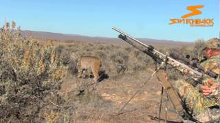 Download Up Close and Personal Bobcat - Switchback Outdoors Video