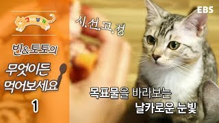 Download 고양이를 부탁해 - 빈&토토의 무엇이든 먹어보세요 #001 Video