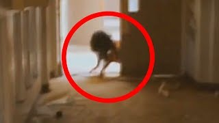Download 5 Scariest Creatures Caught On Camera & Spotted In Real Life! Video