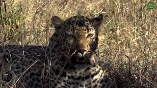 Download Safari Live's Sunset Safari Drive at 3:00 PM on May 08, 2018 ( Xiduku & Wild Dogs ) Video