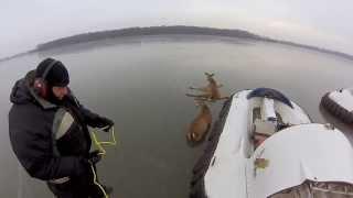 Download GoPro: Hovercraft Deer Rescue Video