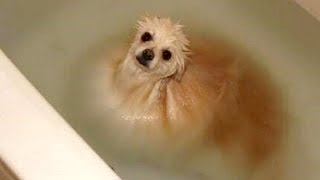 Download FUNNY DOGS + WATER = You LAUGH (Funny DOG VIDEOS compilation) Video