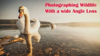 Download Landscape & Wildlife Photography With A Wide Angle Lens Video