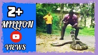 Download Dangerous King Cobra hunt ! Video