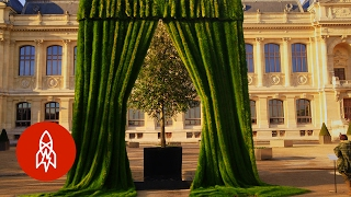 Download Growing Portraits with Grass | That's Amazing Video