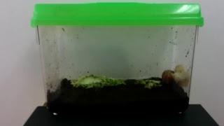 Download 식용 달팽이 하루 (2016.12.05) Video