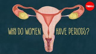 Download Why do women have periods? Video