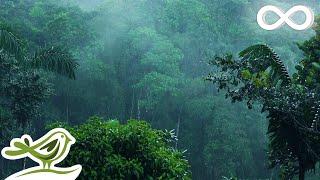 Download Relaxing Music & Soft Rain: Sleep Music, Calm Piano Music, Healing Music, Peaceful Music ★149 Video