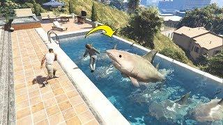 Download تربية أسماك القرش في بركة السباحة في قراند 5؟ GTA V SHARK IN POOL Video