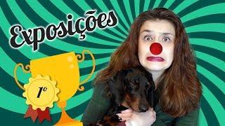 Download EXPOSIÇÕES CANINAS || Longo e Chique Video