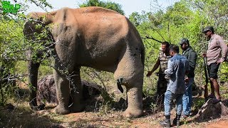 Download Humble elephant with a tumor in his leg gets treated by a Minister in charge of Wildlife Video