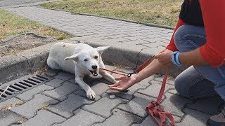 Download Homeless Dog Keeps Following People On The Street For A Heartbreaking Reason Video