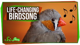 Download Life-Changing Birdsong Video