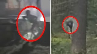 Download 5 Mysterious Creatures Caught in the Woods Video