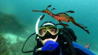Download Introducing Australia's Great Southern Reef Video