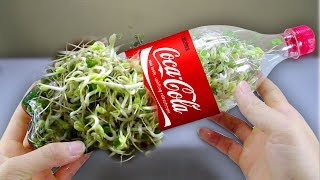 Download Using a coca cola bottle to grow bean sprouts at home - Amazing life hack! Video