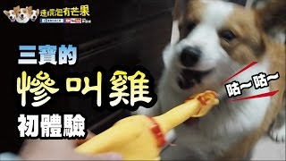 Download [連環泡]慘叫雞初體驗(影片有點吵,請斟酌音量) Video