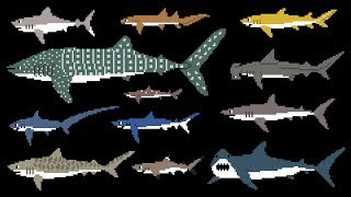 Download Sharks (8-Bit) - Learn Animals - Great White Shark - The Kids' Picture Show (Fun & Educational) Video