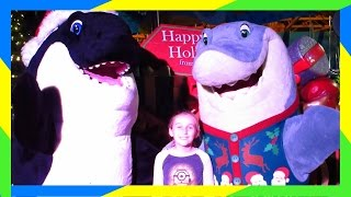 Download SEA WORLD CHRISTMAS CELEBRATION! Video